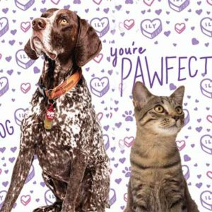 Free Valentine Card With Your Pet's Photo