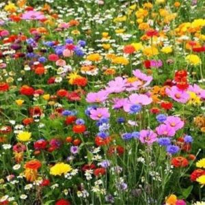 Free WildFlower Seeds From Airwick