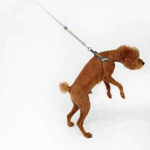 Free Dog Leash with Various Functions